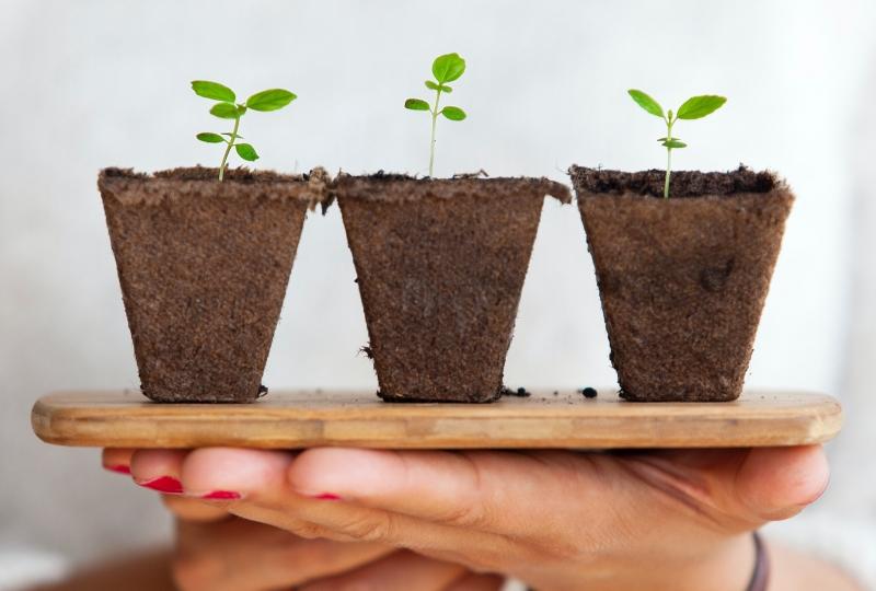 jord og plante
